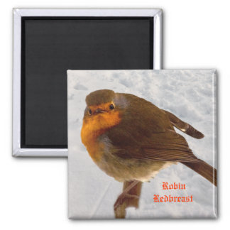 Robin, Redbreast Square Magnet