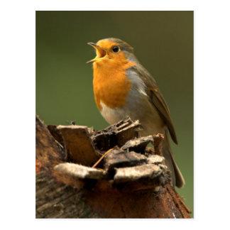 Robin Singing Post Card