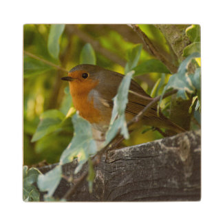 Robin Wood Coaster