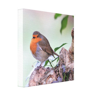 Robin Wrapped Canvas