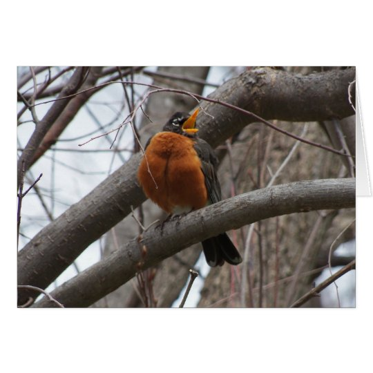 Robin & Wren, Joyful Noise Card