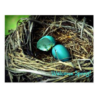 Robin's Egg Nest Spring Postcard