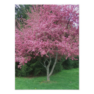 Robinsons Crabapple Tree Poster