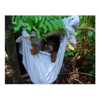 Rock a Bye Baby Orangutan Postcard