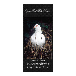Rock Dove Rack Card Template
