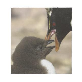 Rock-hopper Penguin, Eudyptes chrysocome, Notepad