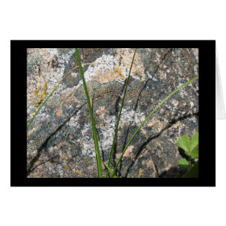 Rock, Lichen, Flora Card