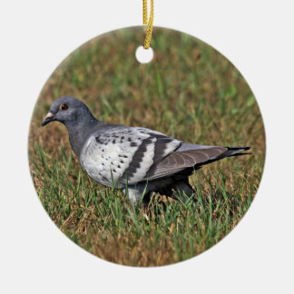 Rock Pigeon Ornament