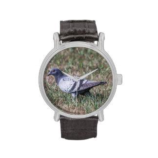Rock Pigeon Watch