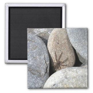 Rock Spider Magnet