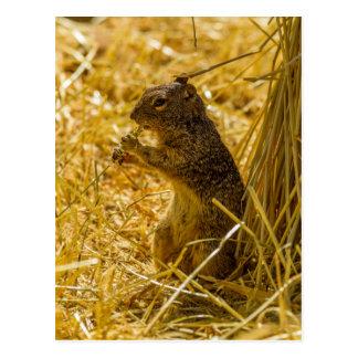 Rock Squirrel Eating Postcard