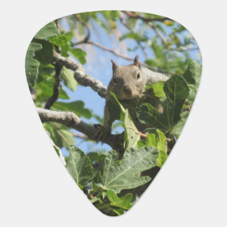 Rock Squirrel Guitar Pick