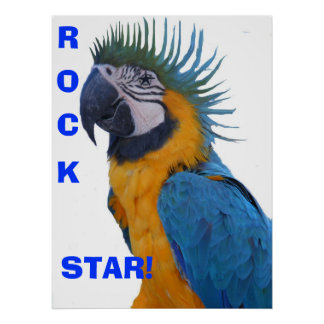 Rock Star Macaw Poster