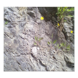 Rock & Stone Photograph