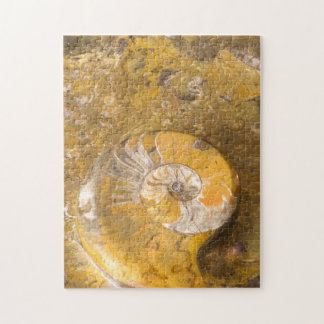 Rock with Fossilized Ammonite and Other Fossils Jigsaw Puzzle