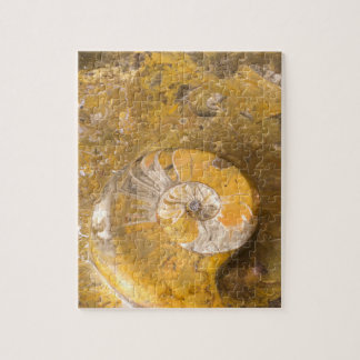 Rock with Fossilized Ammonite & Other Fossils Jigsaw Puzzle