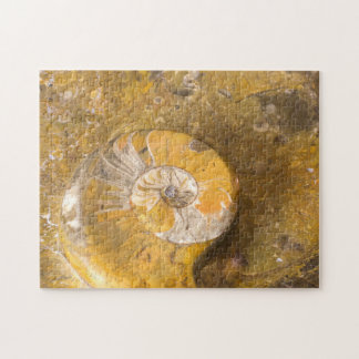 Rock with Fossilized Ammonite & Other Fossils Puzzles