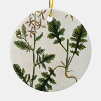 Rocket, plate 242 from 'A Curious Herbal', publish Round Ceramic Decoration