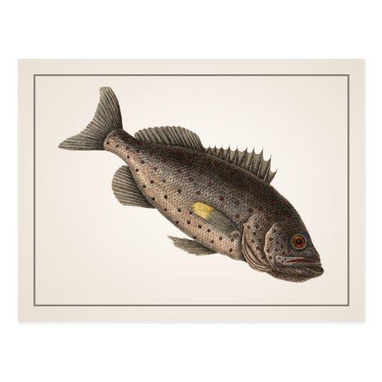 Rockfish Postcard - Style I