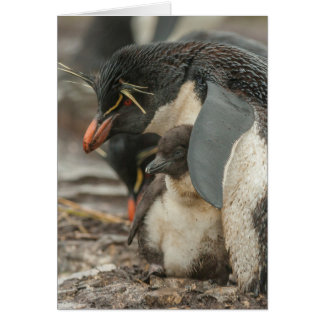Rockhopper penguin and chick card