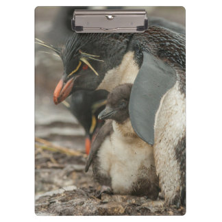 Rockhopper penguin and chick clipboard