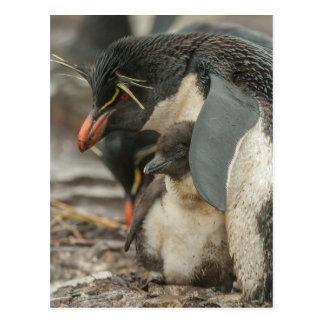 Rockhopper penguin and chick postcard