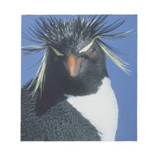 Rockhopper Penguin (Eudyptes chrysocome) Notepad