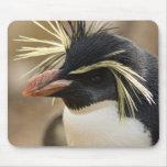 Rockhopper Penguin  Mouse Pad