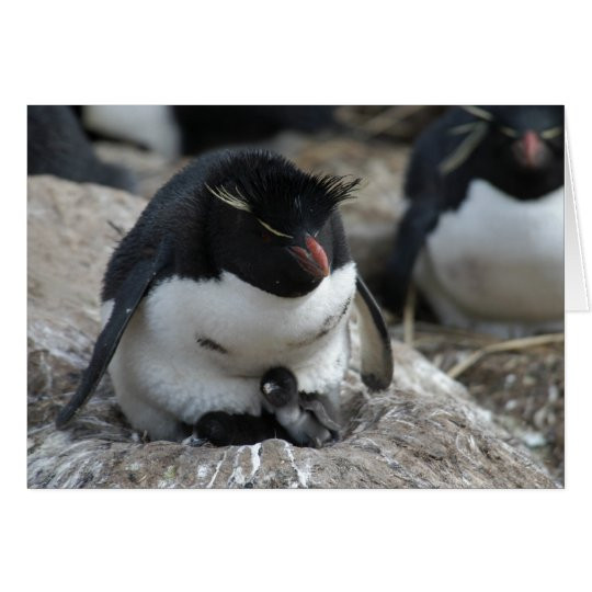 Rockhopper Penguin with Chicks Card