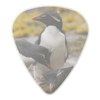 Rockhopper penguins communicate with each other acetal guitar pick