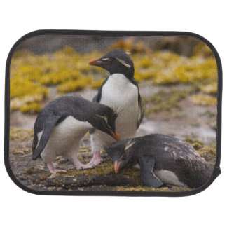 Rockhopper penguins communicate with each other car mat
