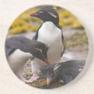 Rockhopper penguins communicate with each other coaster