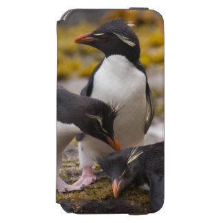 Rockhopper penguins communicate with each other incipio watson™ iPhone 6 wallet case