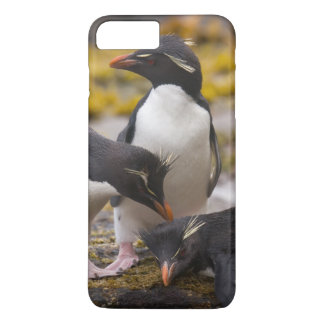 Rockhopper penguins communicate with each other iPhone 8 plus/7 plus case