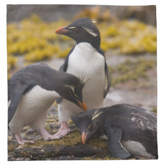 Rockhopper penguins communicate with each other napkin