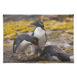 Rockhopper penguins communicate with each other placemat