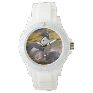 Rockhopper penguins communicate with each other wristwatch