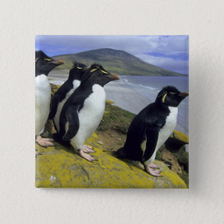 Rockhopper Penguins, (Eudyptes chrysocome), 15 Cm Square Badge