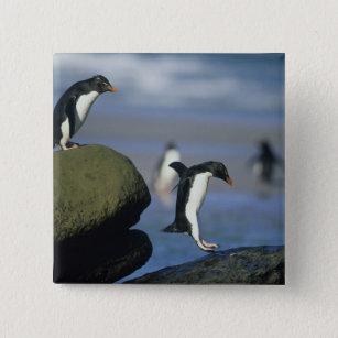 Rockhopper Penguins, Eudyptes chrysocome), 15 Cm Square Badge