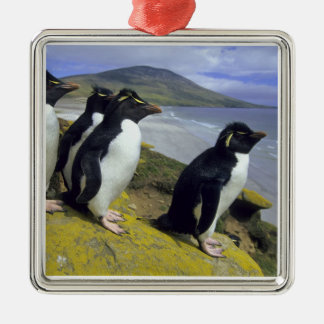 Rockhopper Penguins, (Eudyptes chrysocome), Silver-Colored Square Decoration