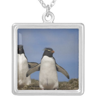 Rockhopper Penguins Eudyptes chrysocome Silver Plated Necklace