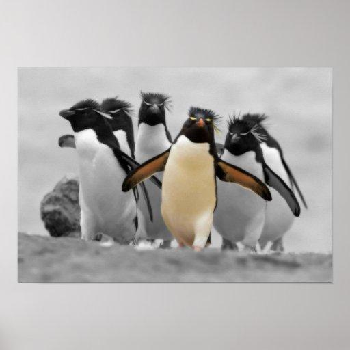 Rockhopper Penguins Posters