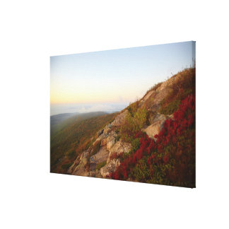 Rocky Hillside, Red Flowers, Acadia National Park Canvas Print