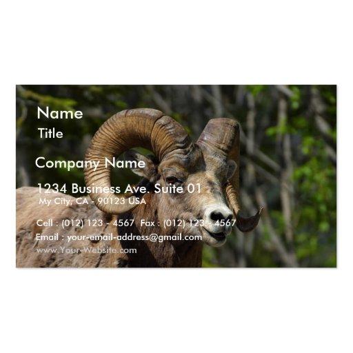 Rocky Mountain Bighorn Sheep Business Card Templates