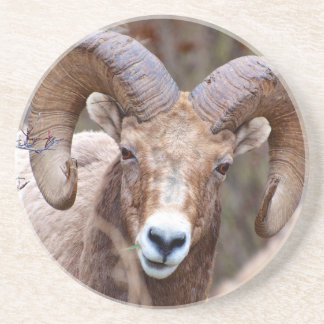 Rocky Mountain Bighorn Sheep Coaster