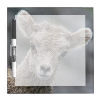 Rocky Mountain Bighorn Sheep Lamb Dry Erase Board