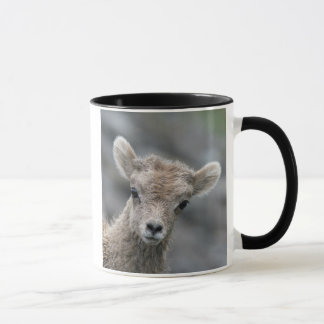 Rocky Mountain Bighorn Sheep Lamb Mug