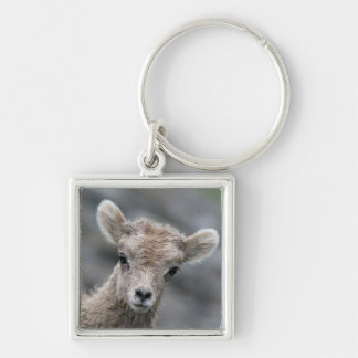 Rocky Mountain Bighorn Sheep Lamb Silver-Colored Square Key Ring