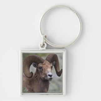 Rocky Mountain Bighorn Sheep Ram 1 Silver-Colored Square Key Ring