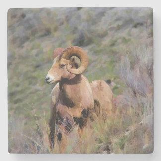 Rocky Mountain Bighorn Sheep Stone Beverage Coaster